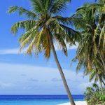 Coup de soleil - Le matin, lisez ce qu'il ya de chaud en politique en Floride - 6.6.19 - Choisir vos vacances pour Juillet et Aout€