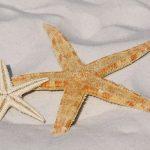 Pourquoi la Corse est l'île idéale pour des vacances en famille - Idées vacances d'été €